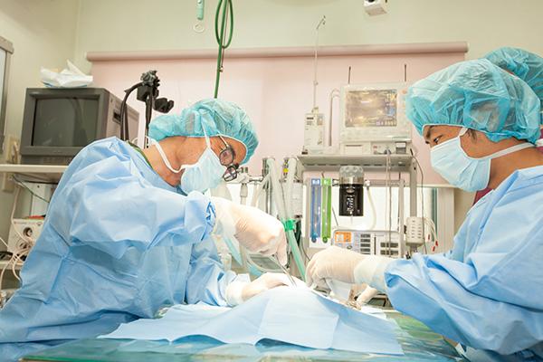 手術中の動物の状態を常時監視しています