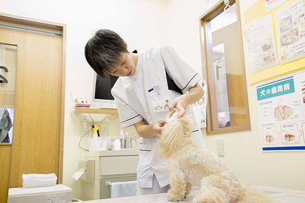 4.検査・治療